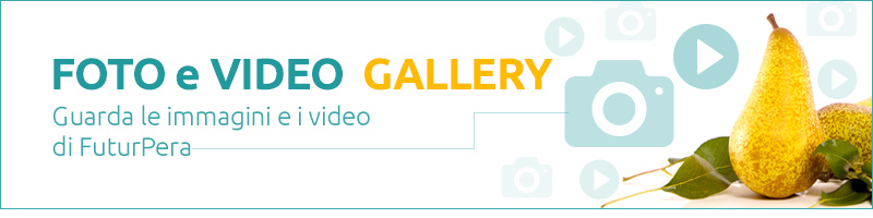 banner foto video gallery