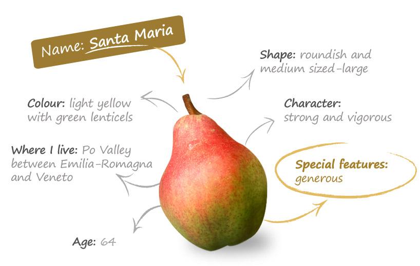 "Резултат с изображение за ""pear santa maria"""""