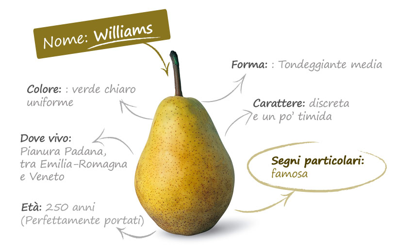 pera-carta-identita-williams