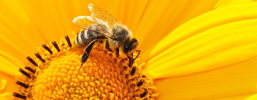 Lo sviluppo dell'apicoltura che fa bene a tutti