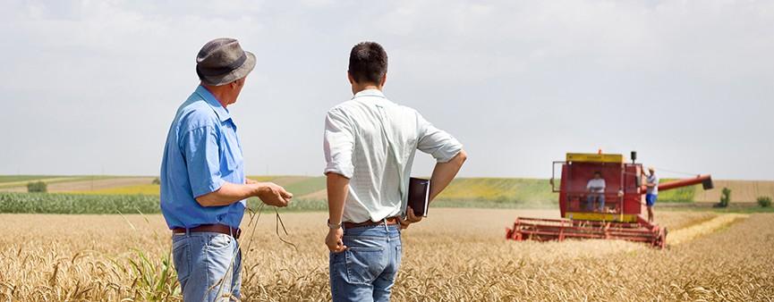 Bando Ismea 2019: Cento milioni di euro per il settore agroalimentare