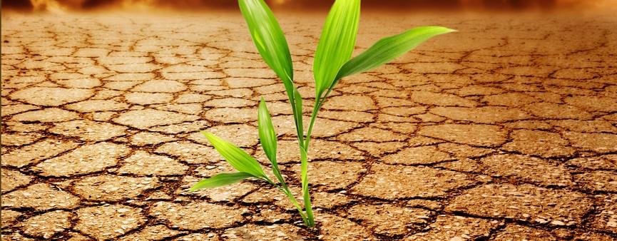 Il clima che cambia, cambia l'agricoltura