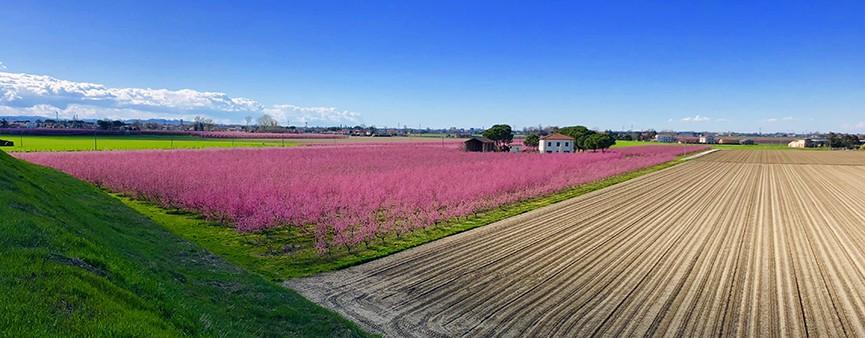 """Nella """"Terra della Pera"""" il record di investimenti per l'agroalimentare"""