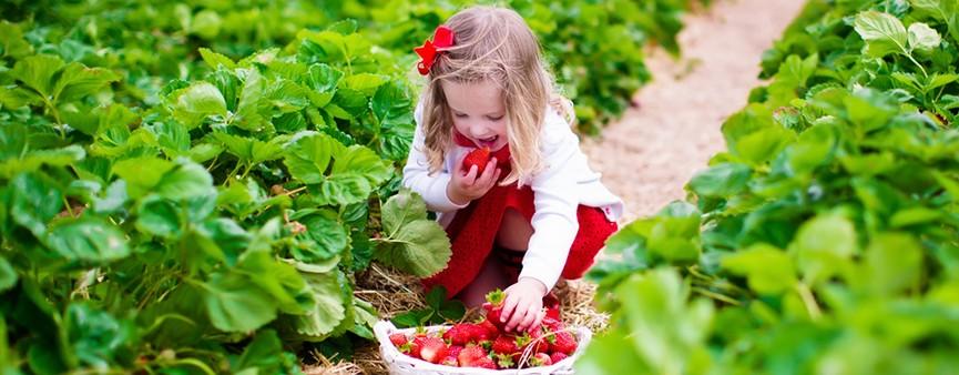 Fruit24!: è sempre l'ora di frutta e verdura!