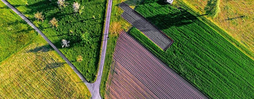 ISTAT: cresce l'economia agricola italiana