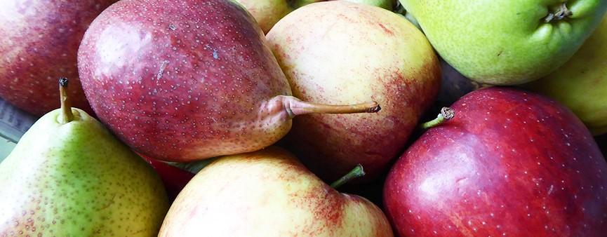 Prognosfuit: una conferenza europea dedicata a pera e mela
