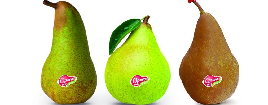 Opera: la pera con il punto esclamativo!