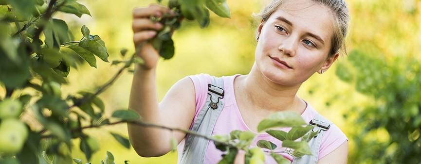 """""""Più impresa"""" per i giovani agricoltori su tutto il territorio nazionale"""