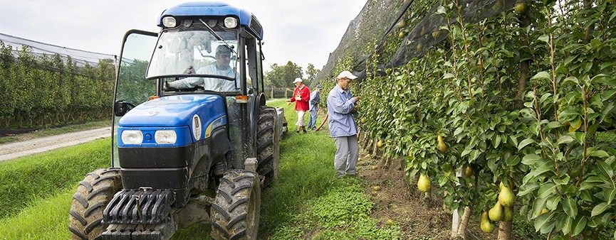 Ultime novità sulla produzione di pere in Europa