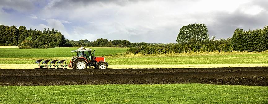 In Emilia - Romagna aumentano produzione ed export