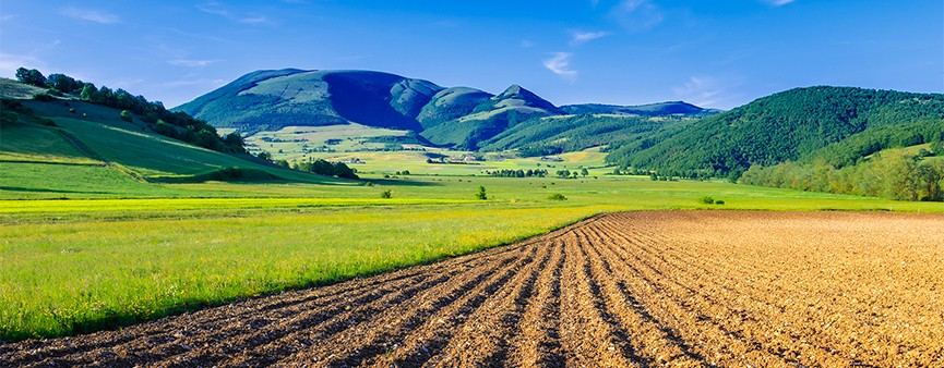Banca delle terre agricole: 8mila ettari per il futuro dei giovani agricoltori