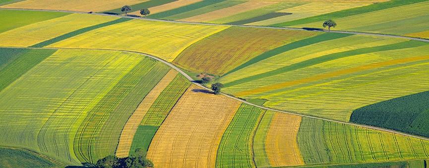 """La """"Banca delle terre agricole"""" per dare futuro ai giovani"""
